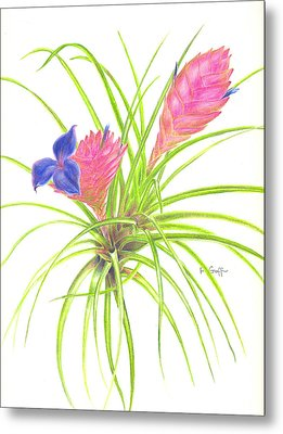 Pink Quill Metal Print by Penrith Goff