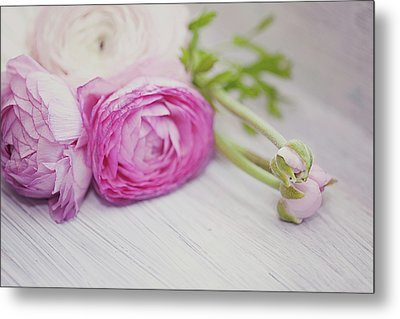 Pink Ranunculus Flowers On White Wooden Shelf Metal Print by Isabelle Lafrance Photography