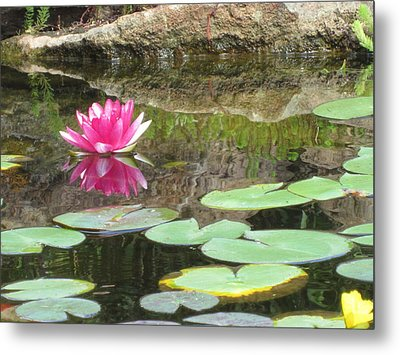 Pink Waterlilly  Metal Print by Laurianna Taylor
