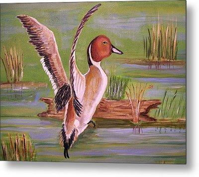 Pintail Duck II Metal Print