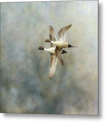 Metal Print featuring the photograph Pintail Duo by Angie Vogel