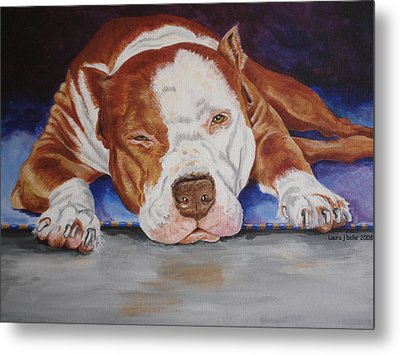 Pitbull Relaxing Metal Print by Laura Bolle