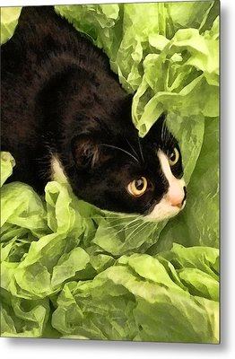 Playful Tuxedo Kitty In Green Tissue Paper Metal Print