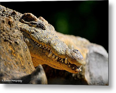 Metal Print featuring the photograph Pointy Teeth by Barbara Bowen