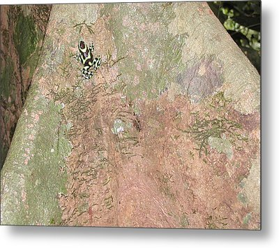 Poison Dart Frog Metal Print by Gregory Young