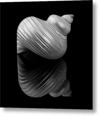Polished Turban Shell And Reflection Metal Print by Jim Hughes