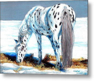Pony At Winter Pasture Metal Print by Angela Finney