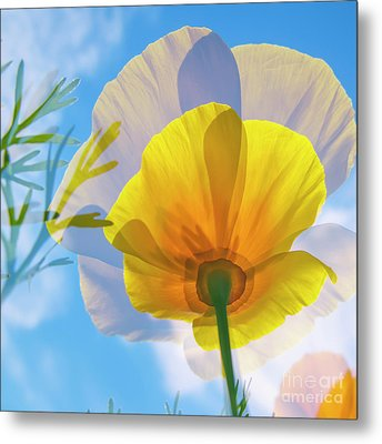 Poppy And Sun Metal Print