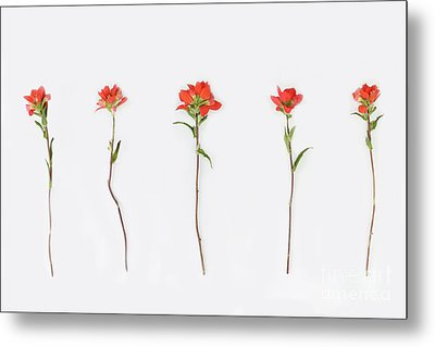 Poppy Blossoms Metal Print by Brittany Bevis