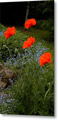 Poppy Foursome Metal Print by Renate Nadi Wesley