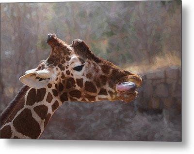 Portrait Of A Giraffe Metal Print by Ernie Echols
