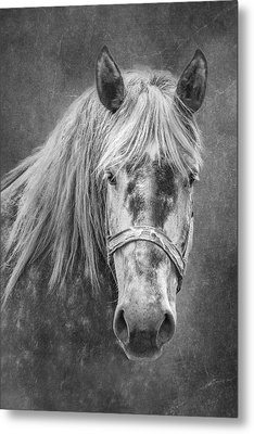 Portrait Of A Horse Metal Print by Tom Mc Nemar