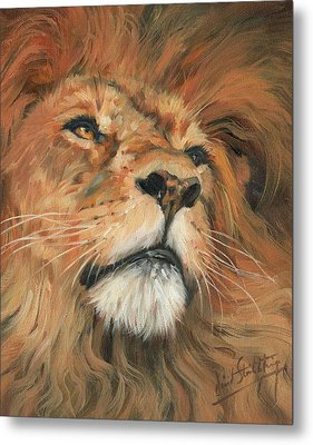 Metal Print featuring the painting Portrait Of A Lion by David Stribbling