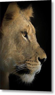 Portrait Of A Young Lion Metal Print by Ernie Echols
