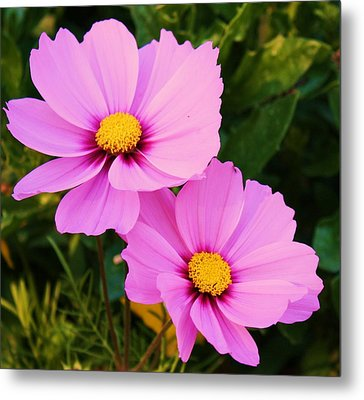 Pretty In Pink Metal Print by Russell  Barton