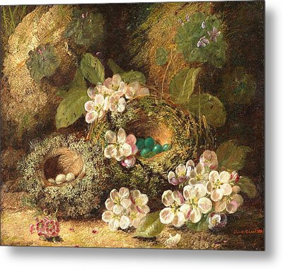 Primroses And Bird's Nests On A Mossy Bank Metal Print by Oliver Clare