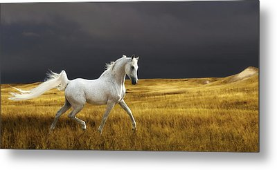 Prince Of The Plains Metal Print by Ron  McGinnis