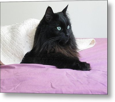 Princessy Cat Metal Print by AJ Brown