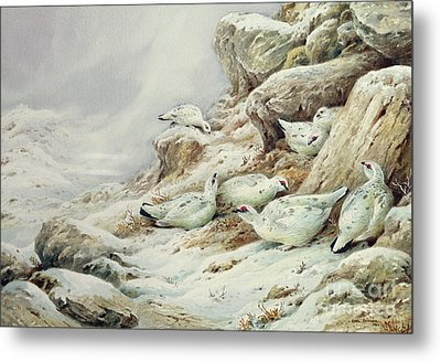 Ptarmigan In Snow Covered Landscape Metal Print