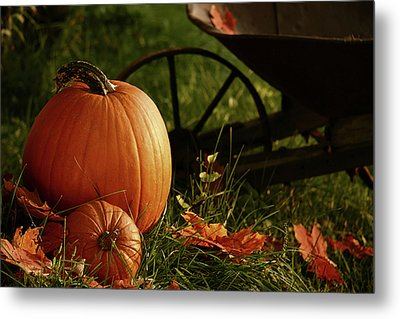 Pumpkins In The Grass Metal Print by Sandra Cunningham