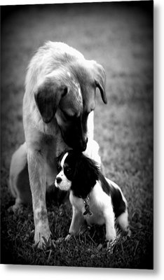Puppies Metal Print by Susie Weaver