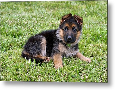 Puppy In The Spring Metal Print by Sandy Keeton