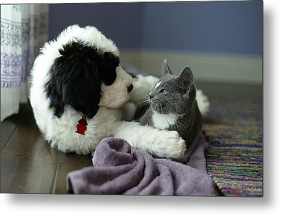 Metal Print featuring the photograph Puppy Love by Linda Mishler