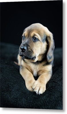 Puppy Portrait Metal Print