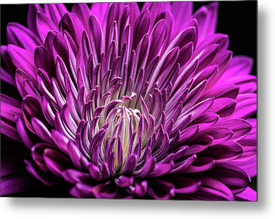 Purple Beauty Metal Print