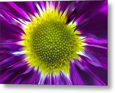 Purple Burst Metal Print
