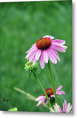 Metal Print featuring the photograph Purple Cone by Traci Cottingham