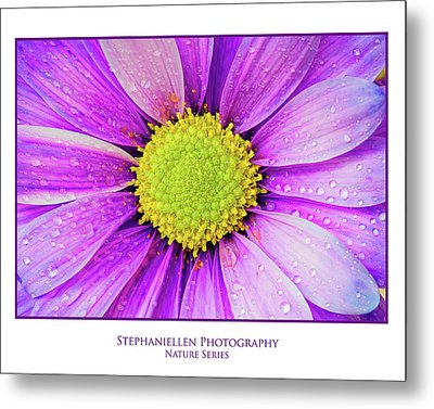Purple Daisy Metal Print by Stephanie Hayes