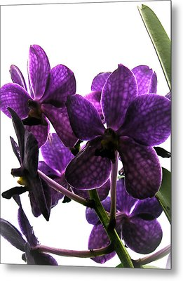Purple Metal Print by Dora Miller