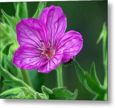 Purple Flower 2 Metal Print by Marty Koch