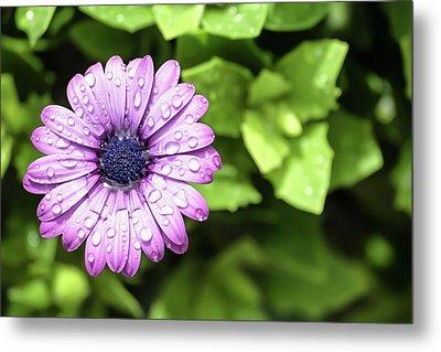 Purple Flower On Green Metal Print