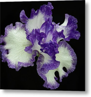 Metal Print featuring the photograph Purple Iris Frills by Jean Noren