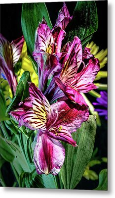 Purple Lily Metal Print by Mark Dunton