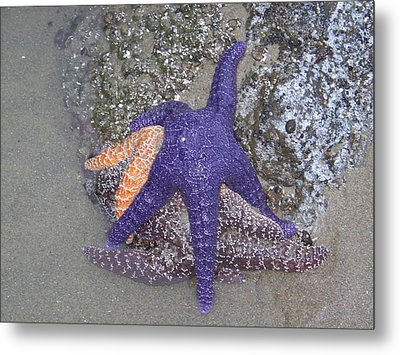 Metal Print featuring the photograph Purple Starfish by Angi Parks
