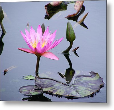 Purple Waterlily With Pod Metal Print by Margie Avellino