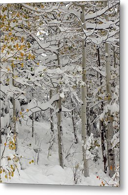 Quakies In Early Winter Metal Print by DeeLon Merritt