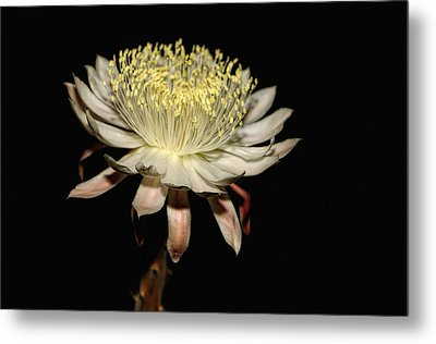 Queen Of The Night Metal Print