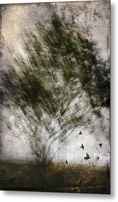 Quickly Metal Print by Carol Leigh
