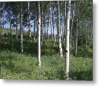 Quiet Forest Metal Print by Susan Pedrini