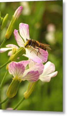 Radish Flower And The Fly Metal Print by Steve Augustin