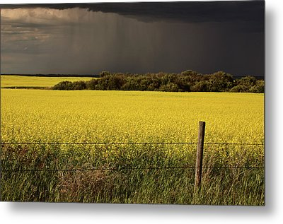 Rain Front Approaching Saskatchewan Canola Crop Metal Print by Mark Duffy
