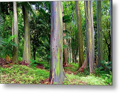 Rainbow Eucalyptus Metal Print by Monica and Michael Sweet