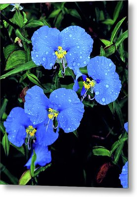 Raindrops In Blue Metal Print by Peg Urban