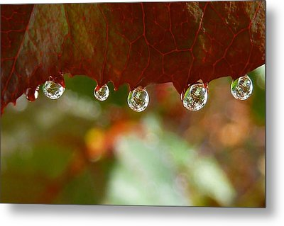 Raindrops On A Red Leaf Metal Print by Patricia Strand