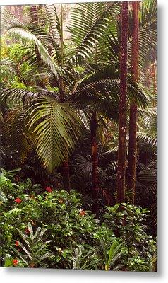 Rainforest Palm Trees  Metal Print by Thomas R Fletcher