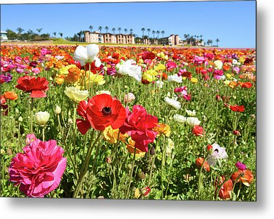 Metal Print featuring the photograph Ranunculus by Dung Ma